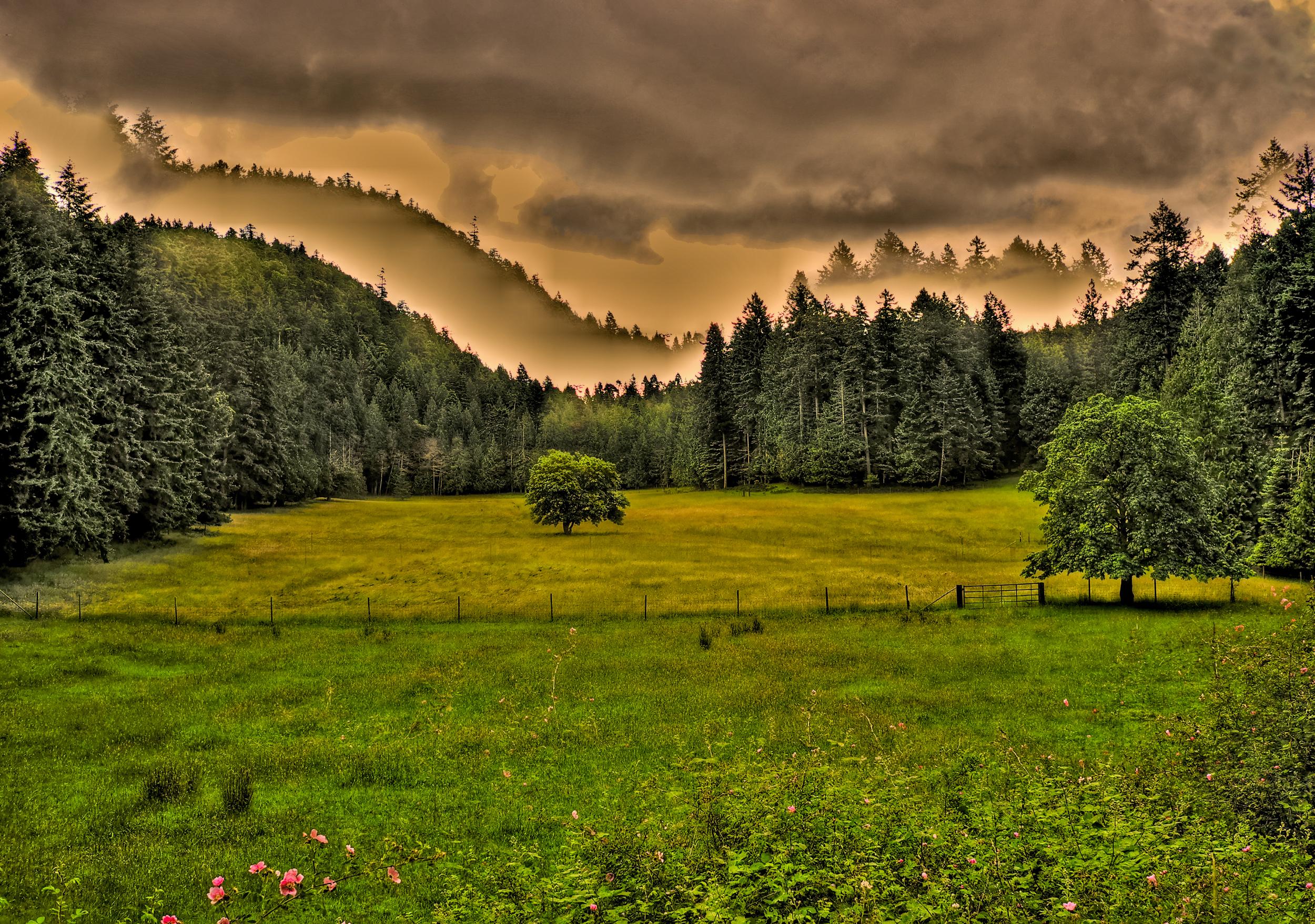 Field, Mayne