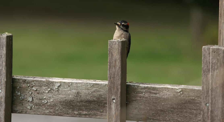 Bird Preacher