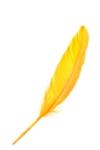 yellowfeatherimage.jpg