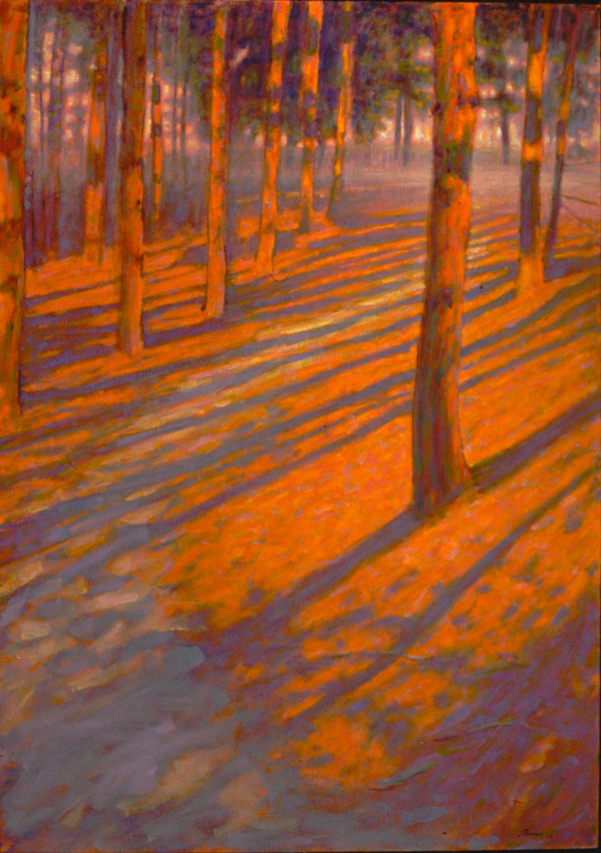 Shadows Among The Pines