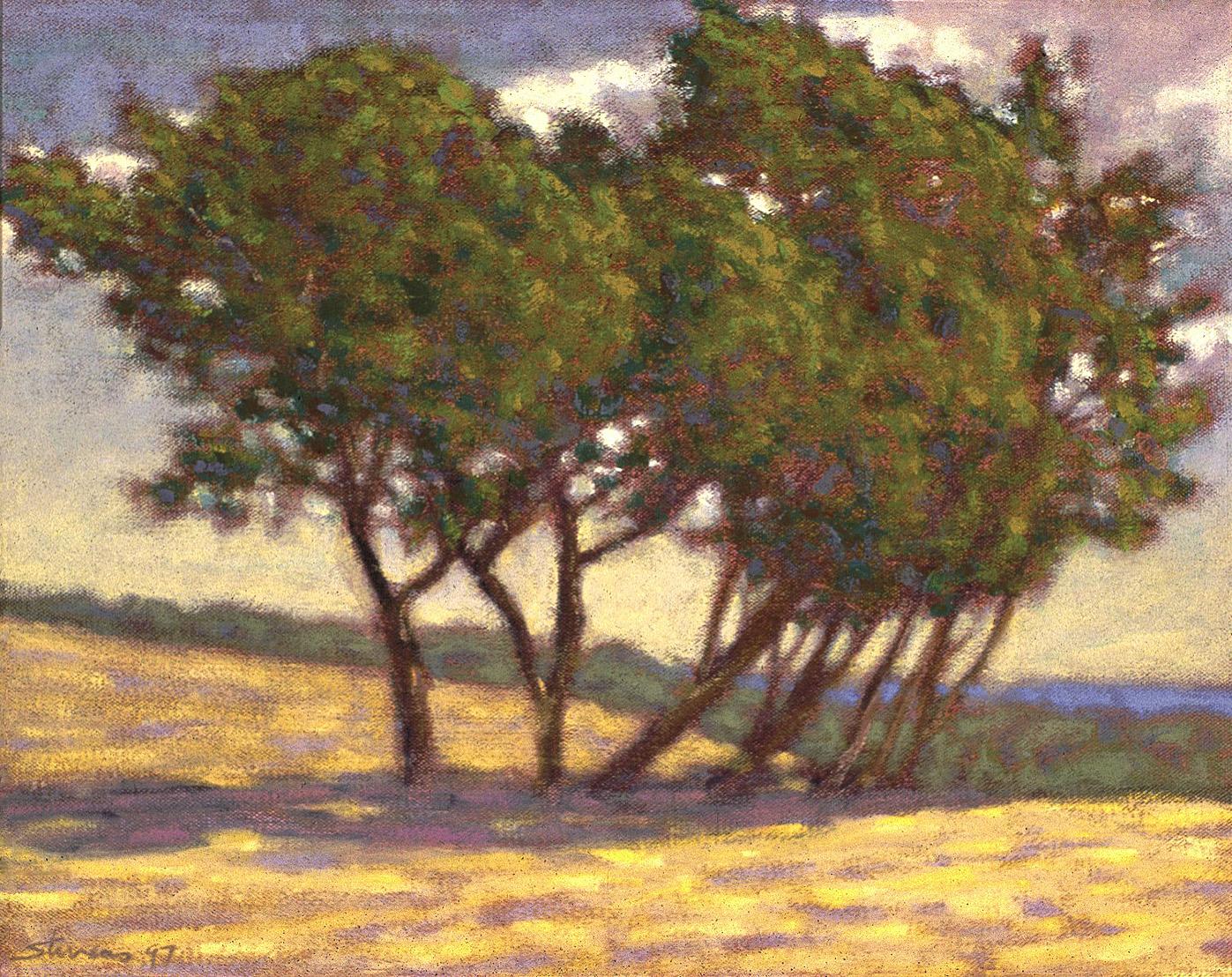"Windblown Trees   | oil on canvas | 12 x 17"" | 1997"