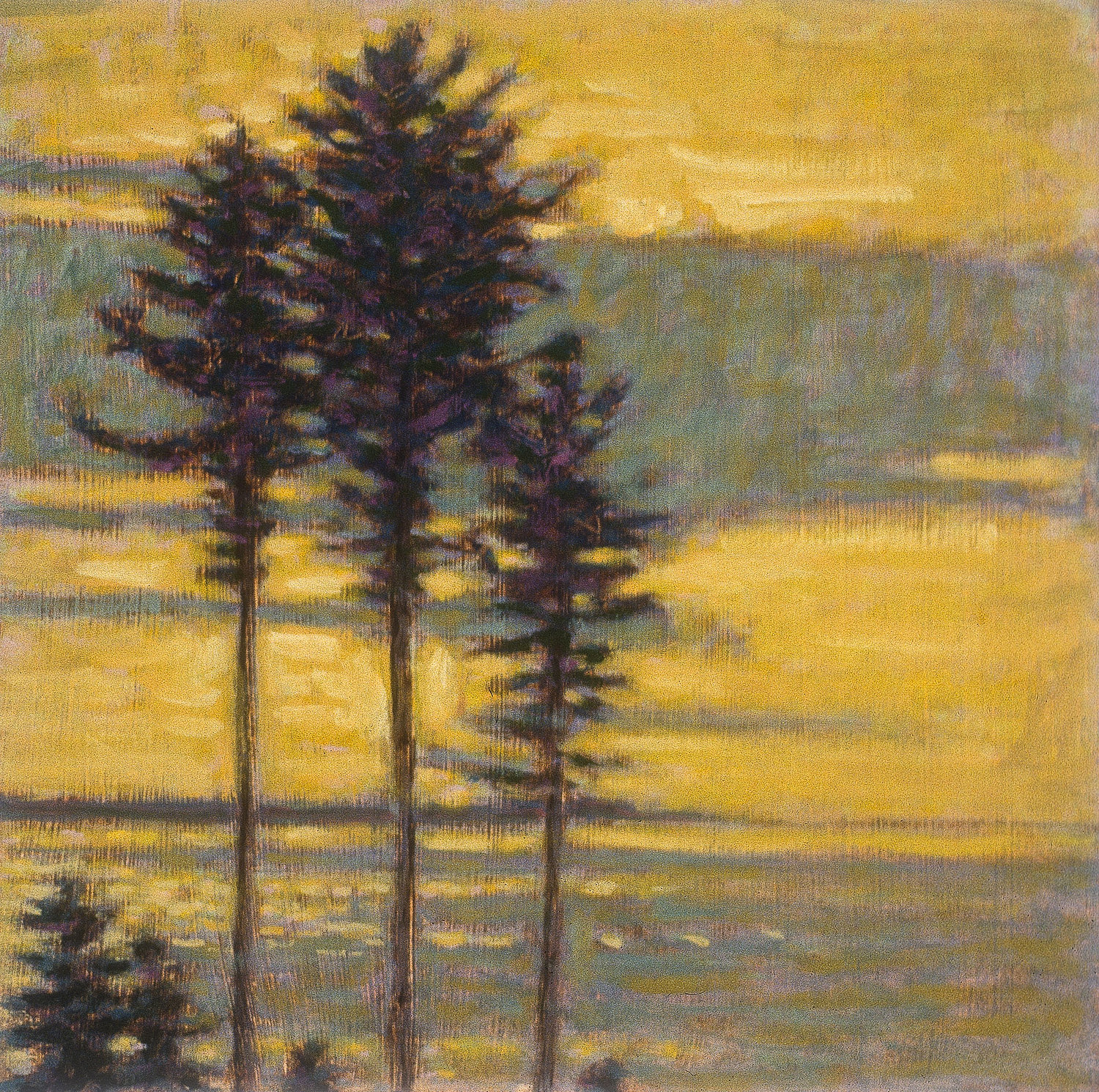 """Silhouetted Pines   
