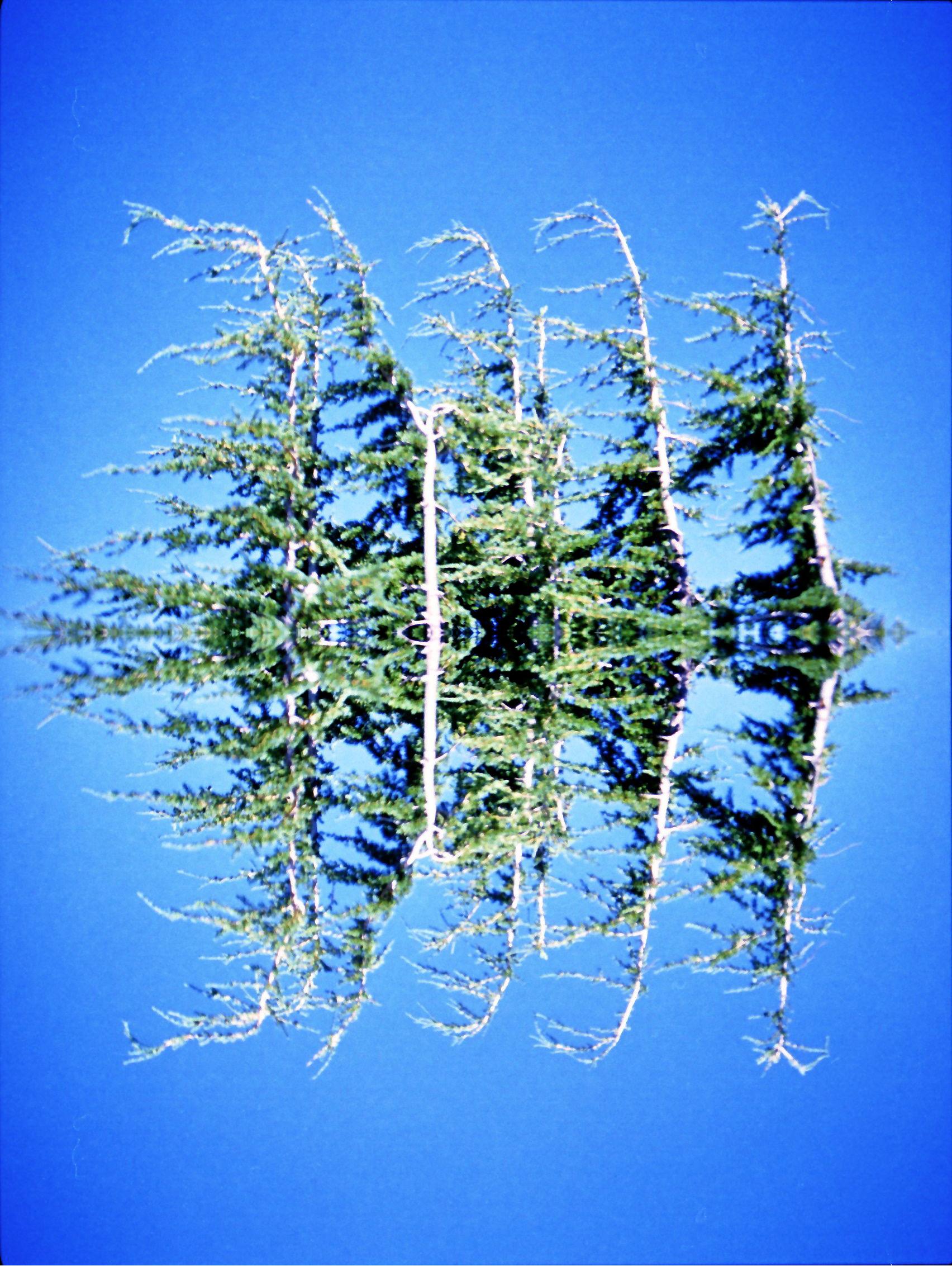 trees copy.jpg