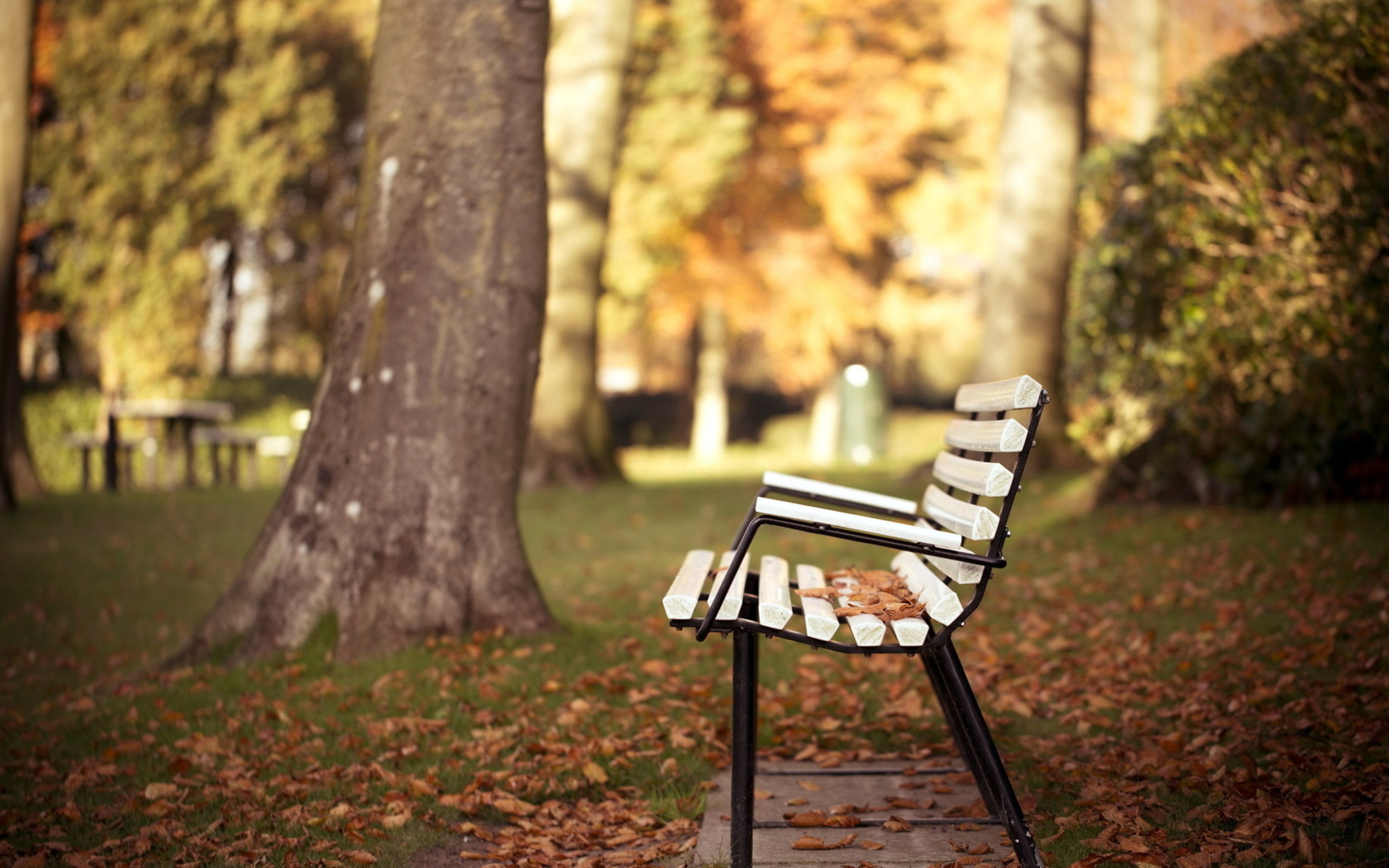 Sweet a bench! Now I can break and upload all these pics to instagram! #fall #nature
