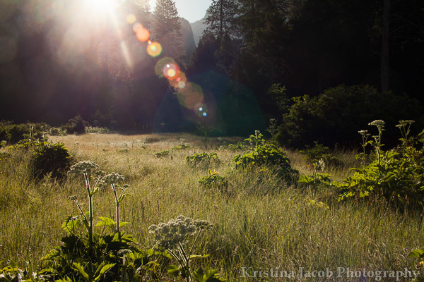 Meadow in Yosemite National Park