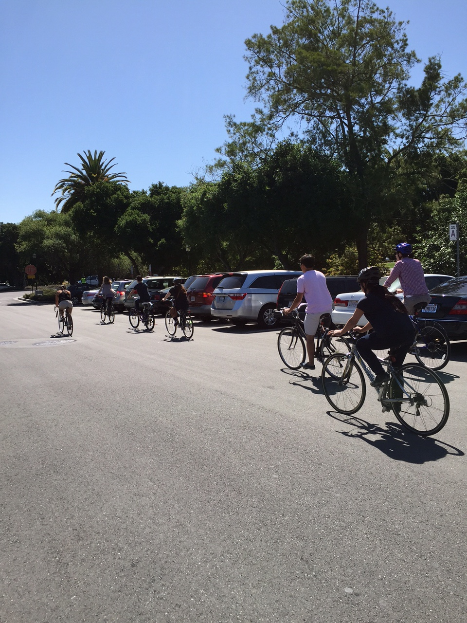 Dixon lab bicycle posse on the way to a lab lunch