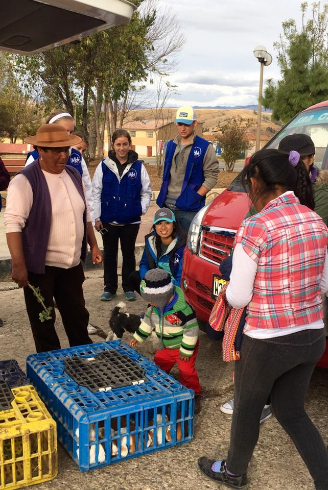 SIHF Huancayo, Peru  Cuy distribution in the community of Aco.