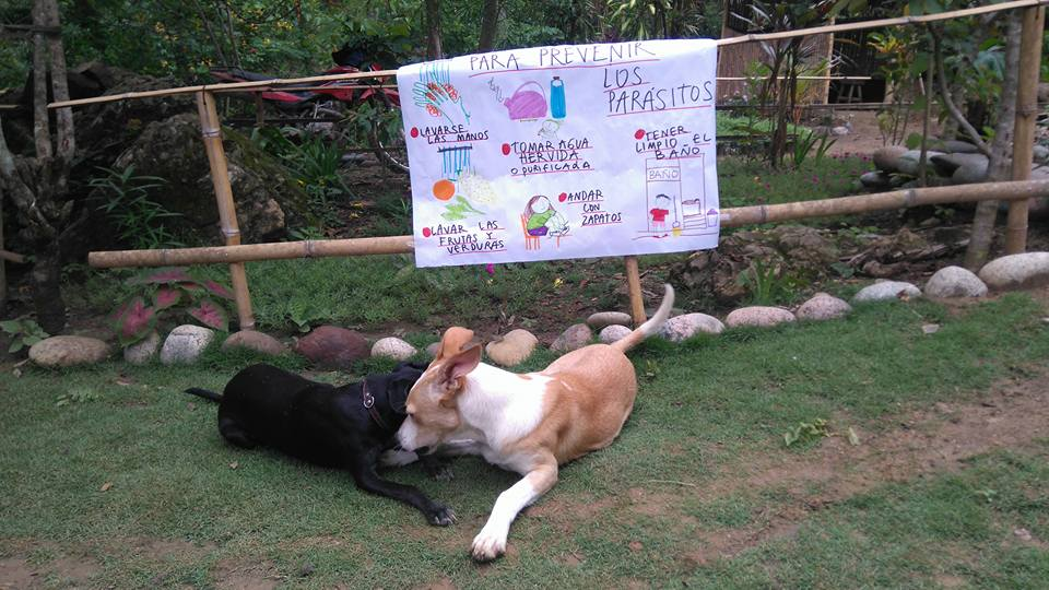 Even the dogs want to prevent parasites!