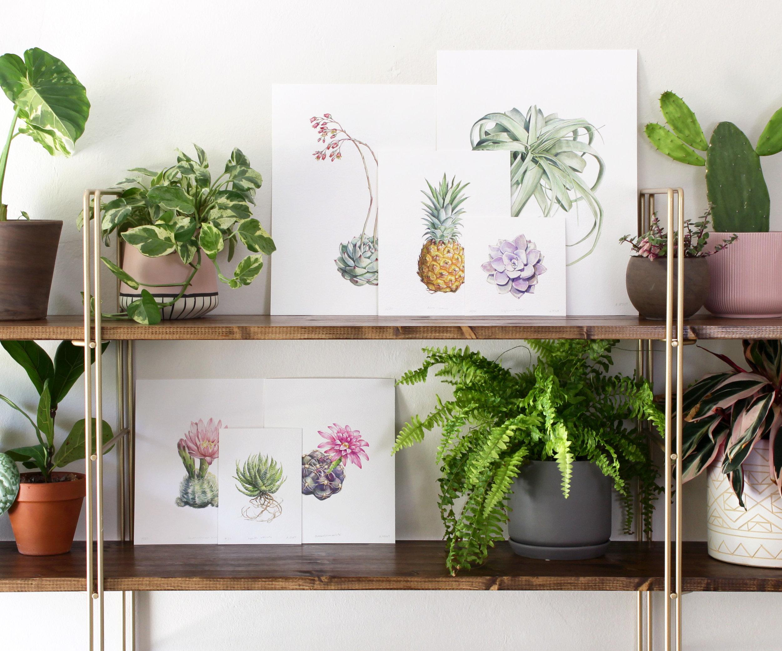 Print sale shelf.jpg