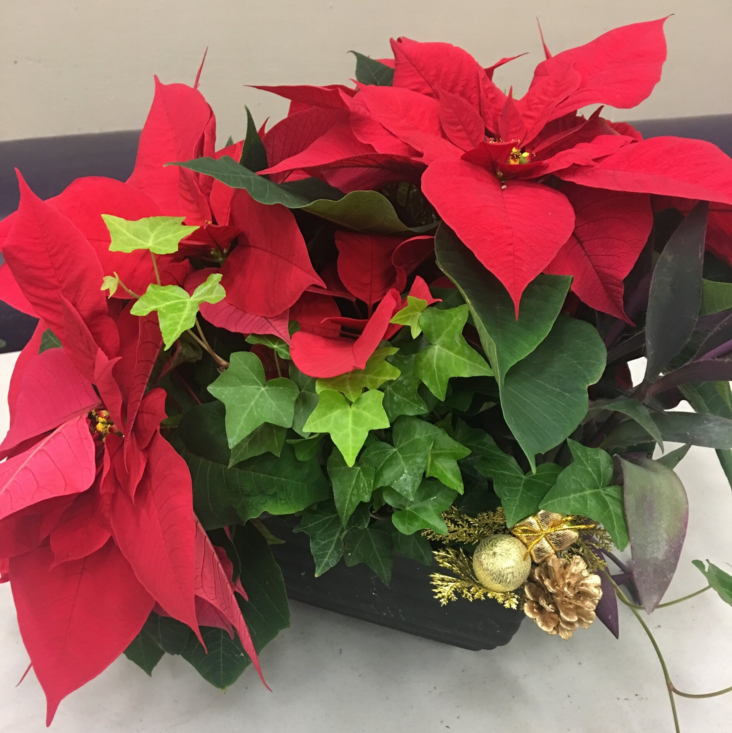 From last year's delivery, this is the Yuletide Treasurer planter.