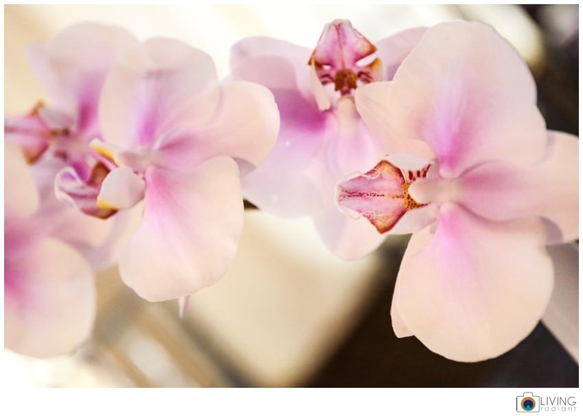 Victoria-Clausen-Floral-Events-Hayfields_0026.jpg