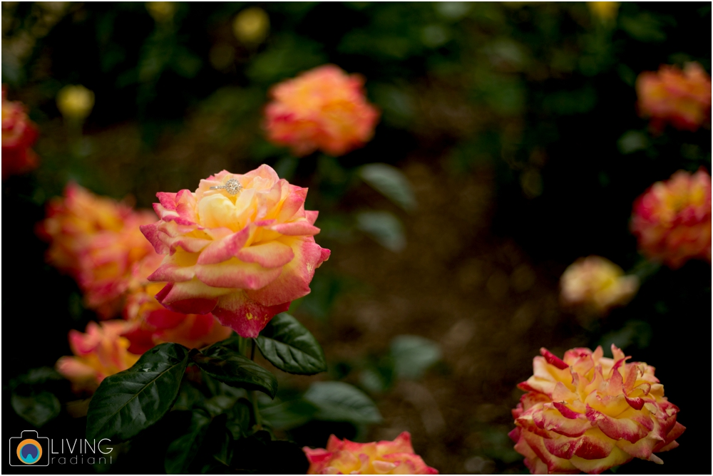 melissa-chris-brookside-gardens-engagement-session-outdoor-gardens-living-radiant-photography-maggie-patrick-nolan_0013.jpg