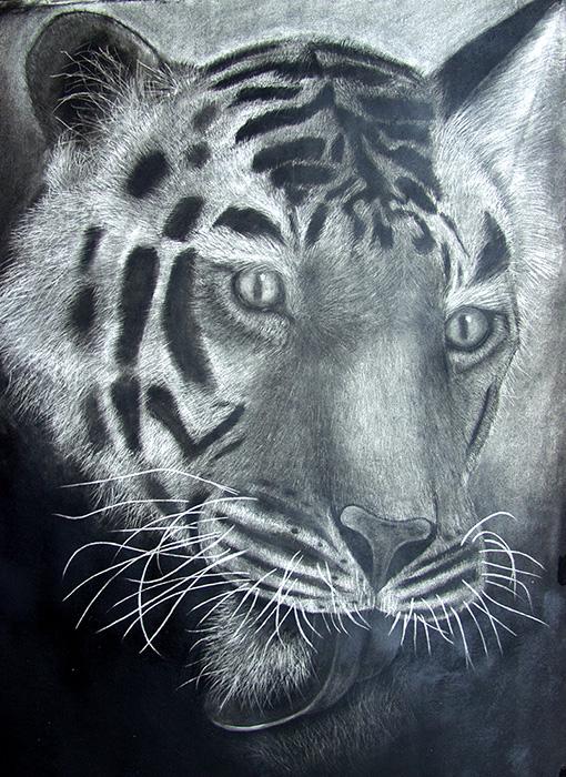 Charcoal Drawing  ::  NatGeo Tiger