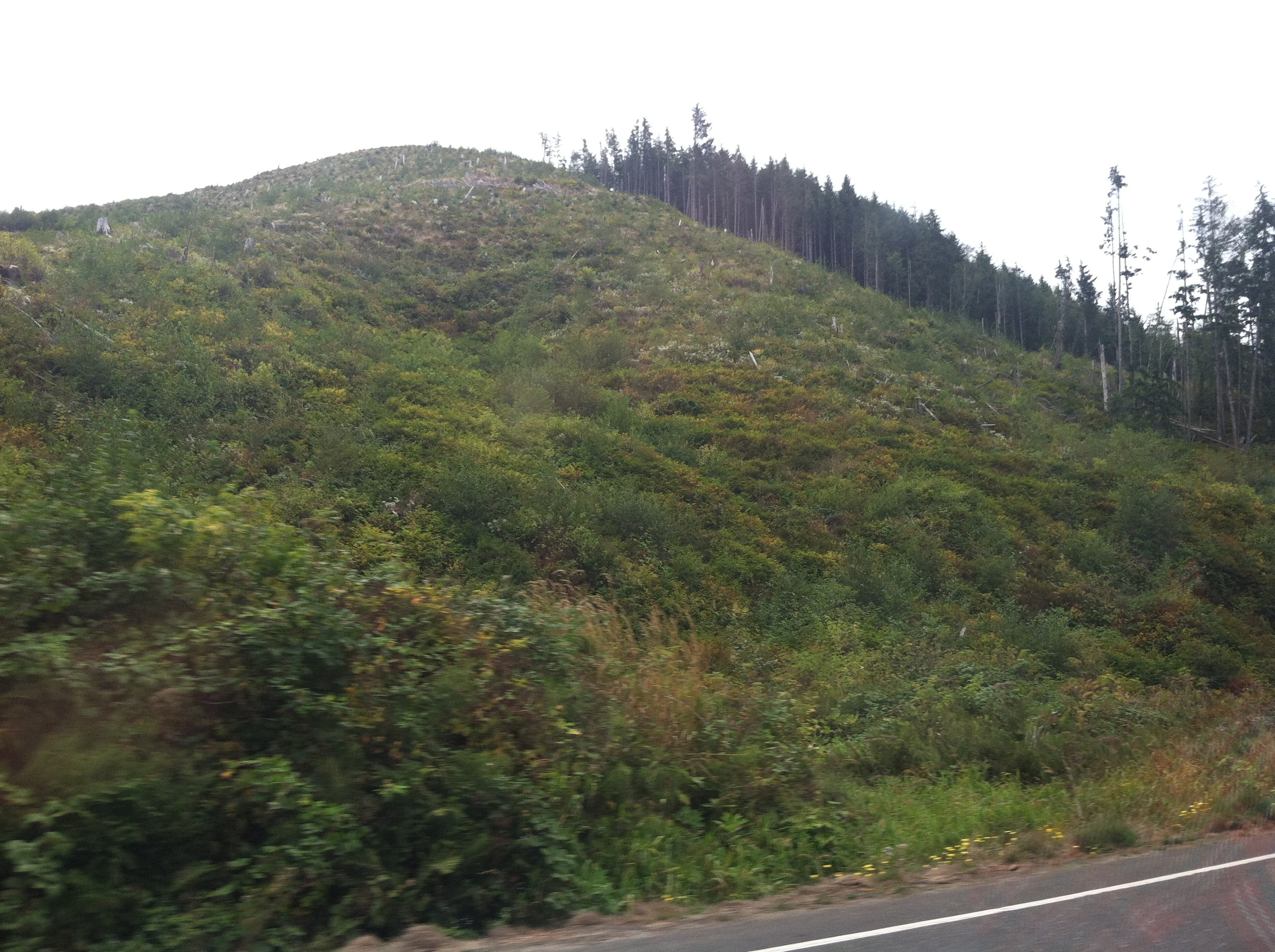 From the drive there.  On the East Coast, we never see where our paper comes from, and clearcut hillsides are freaking sad to look at.
