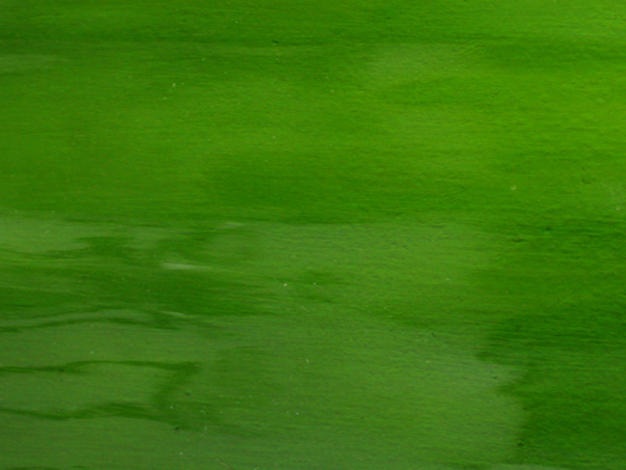 "Moss   Transparent  ""Waterglass"" texture"