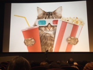 Cat moviegoer NYCFF.jpg