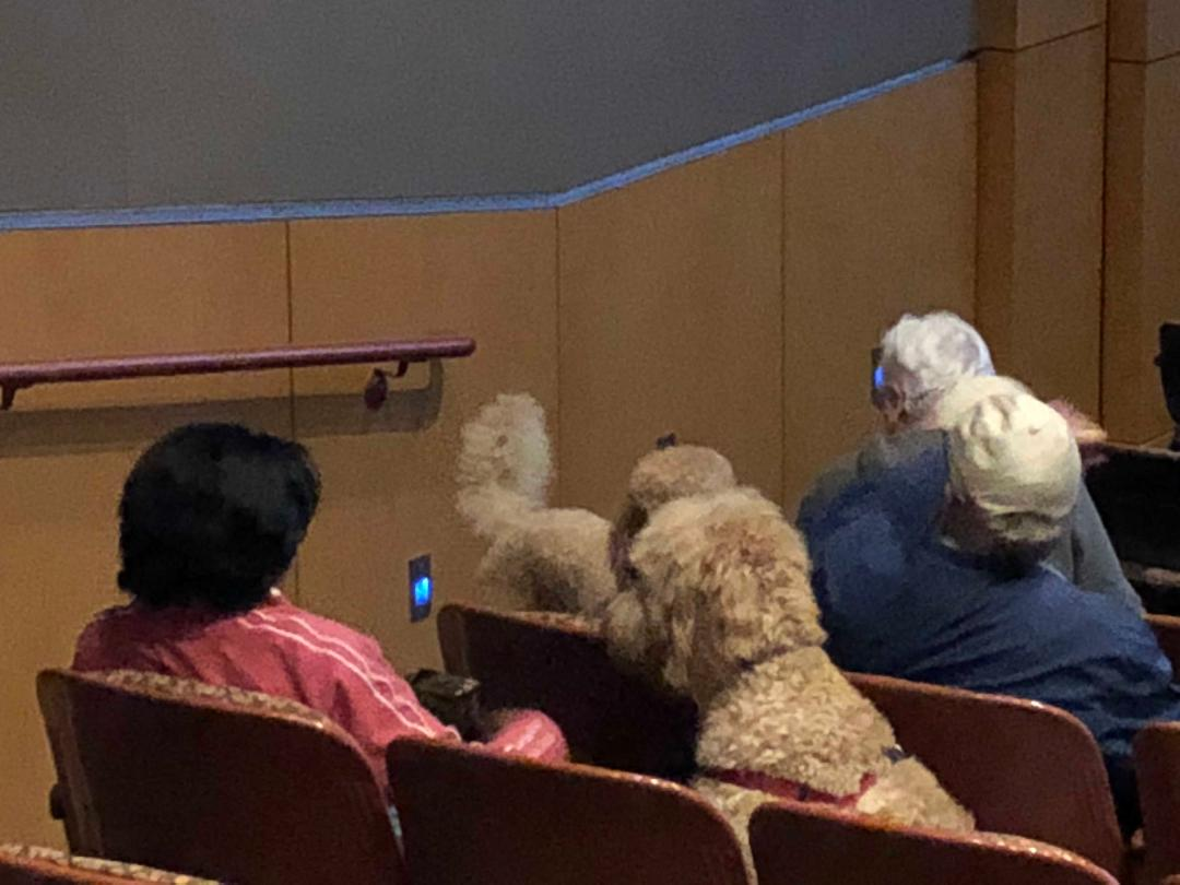 dogs seated in theater.jpg