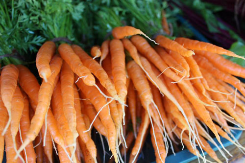 carrots-organic-templeton-farms-500.jpg