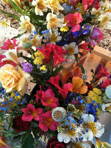 flower-mix-organic-templeton-farms-500.jpg