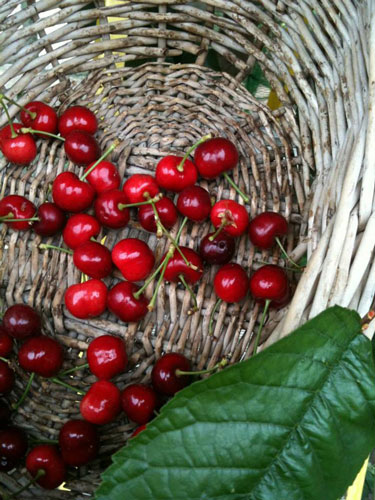 cherries-organic-templeton-farms-500.jpg