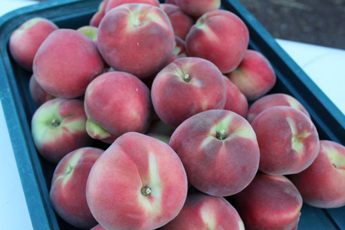 TVF-more3-peaches-organic.jpg