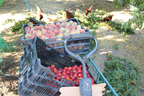 TVF-fruit-wagon-organic.jpg
