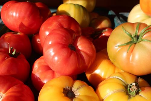 tomatoes-500.jpg