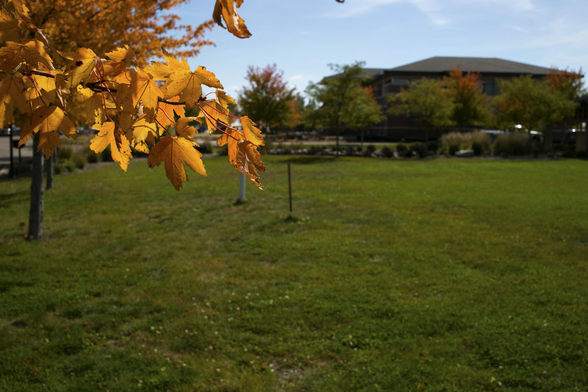 fall_leaves_03.jpg