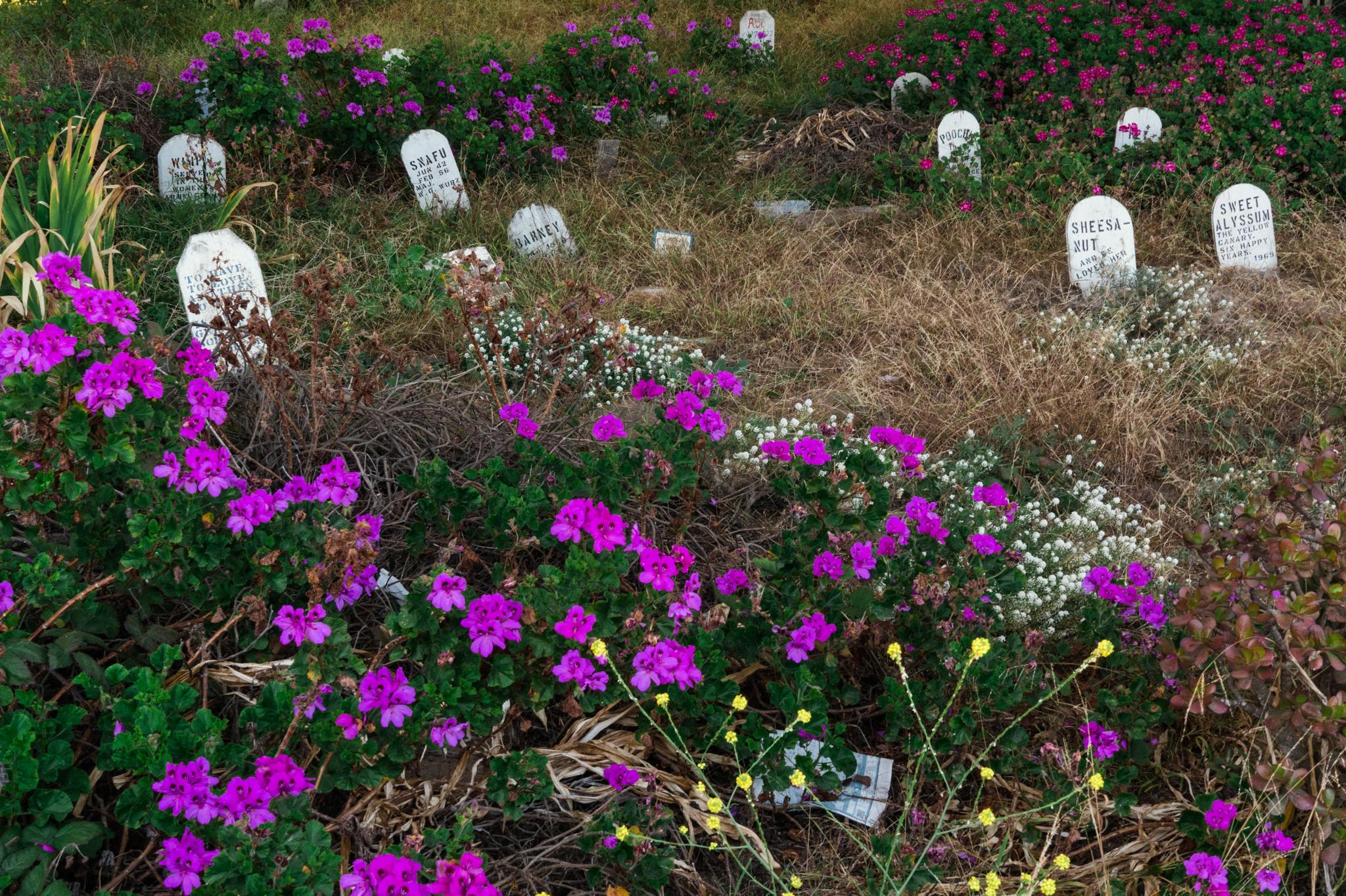 Pet Cemetery beneath the 101, San Francisco, CA