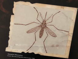 Yellow fever was spread by the female mosquito of the Aedis aegypti species.