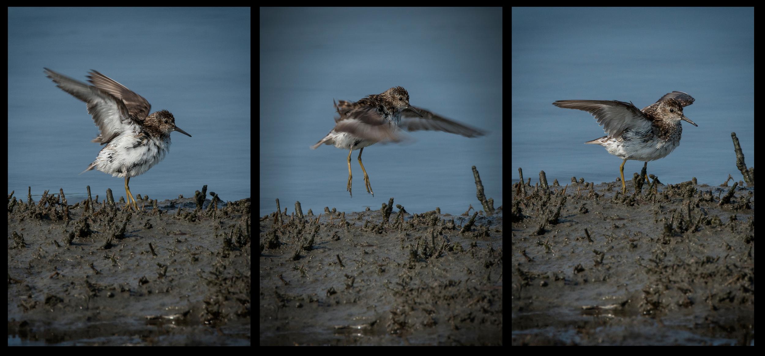bird jump.jpg