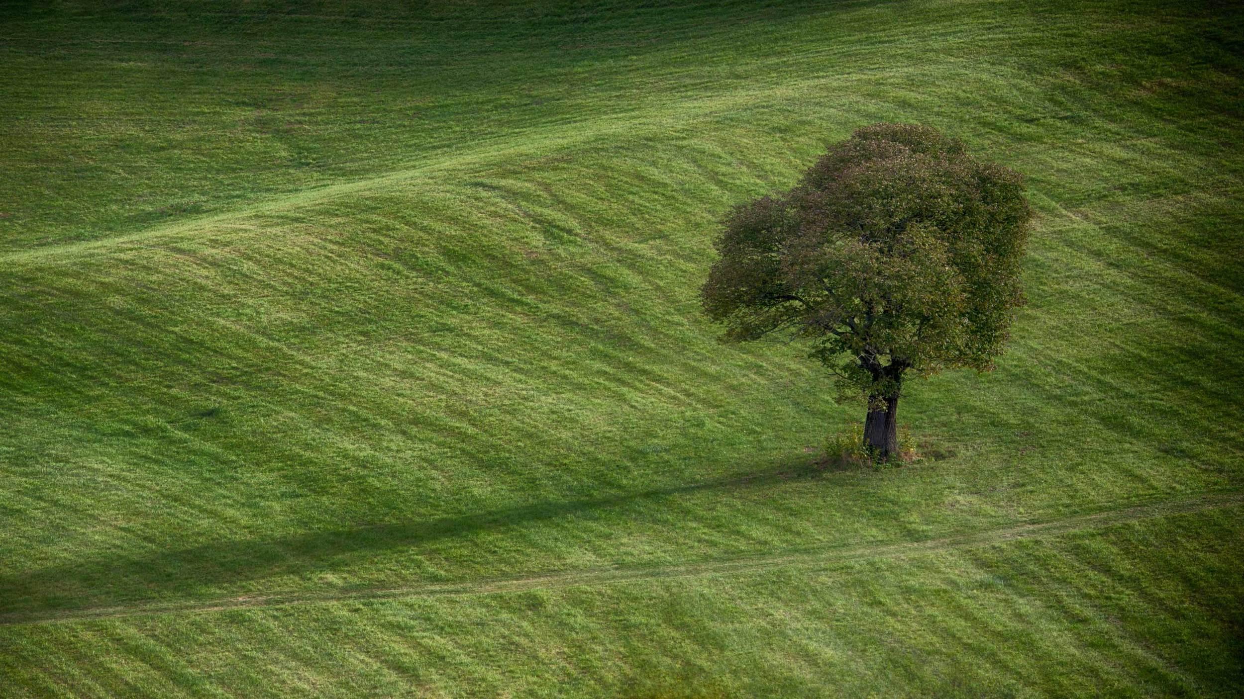 Tree WEB.jpg