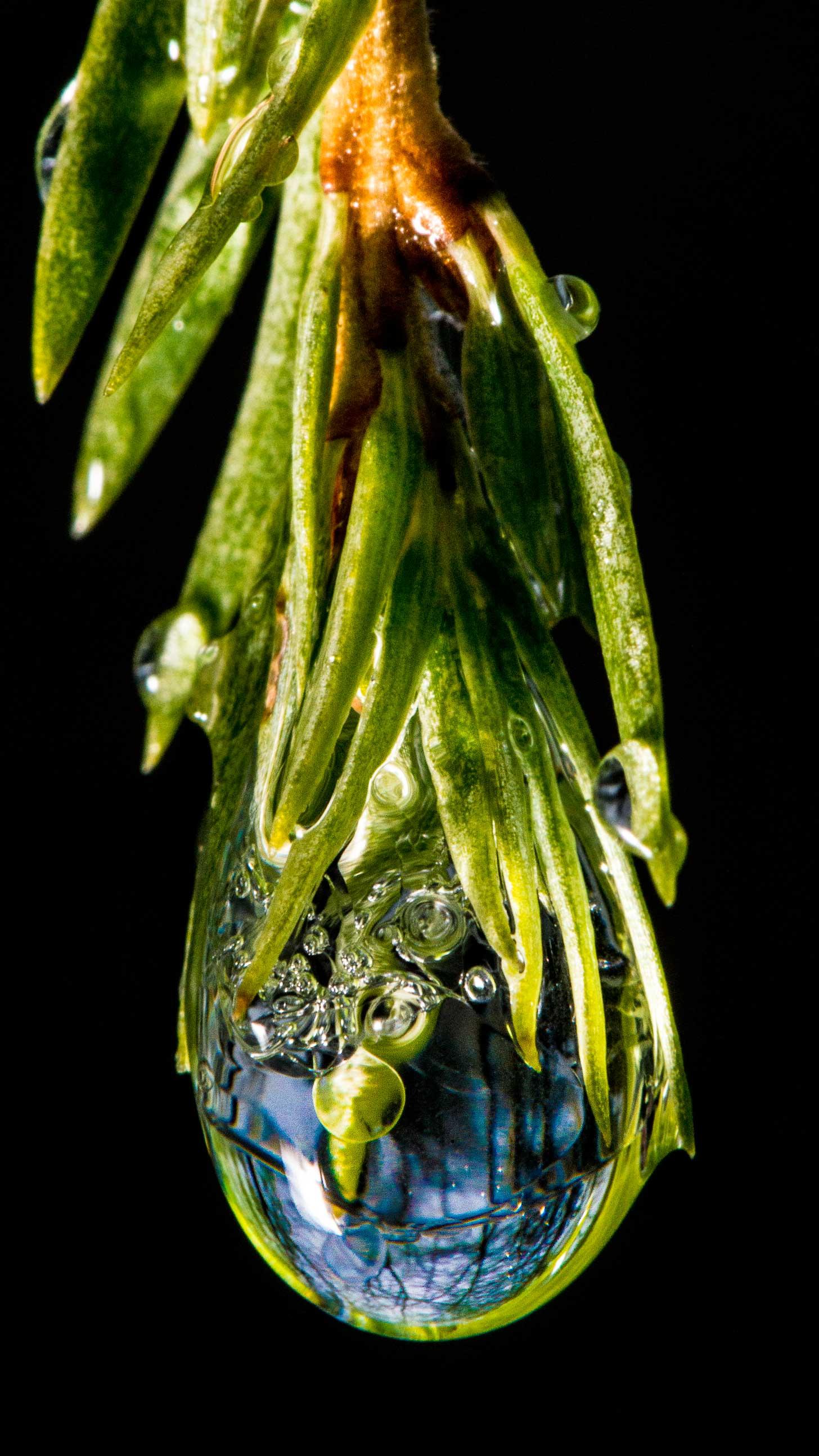 Frozen_Water_Droplet_Ice_ScenicTraverse.jpg