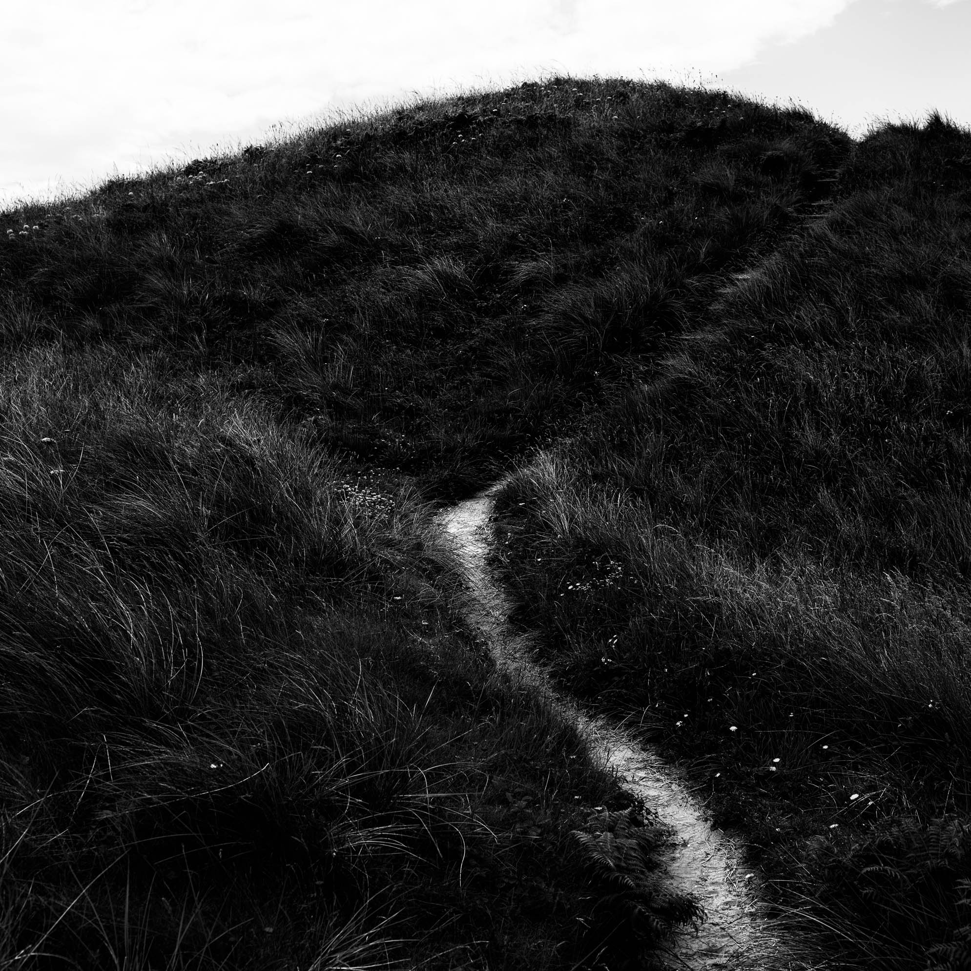 A narrow path in the grass leading to the edge of the cliff on Llanddwyn Island