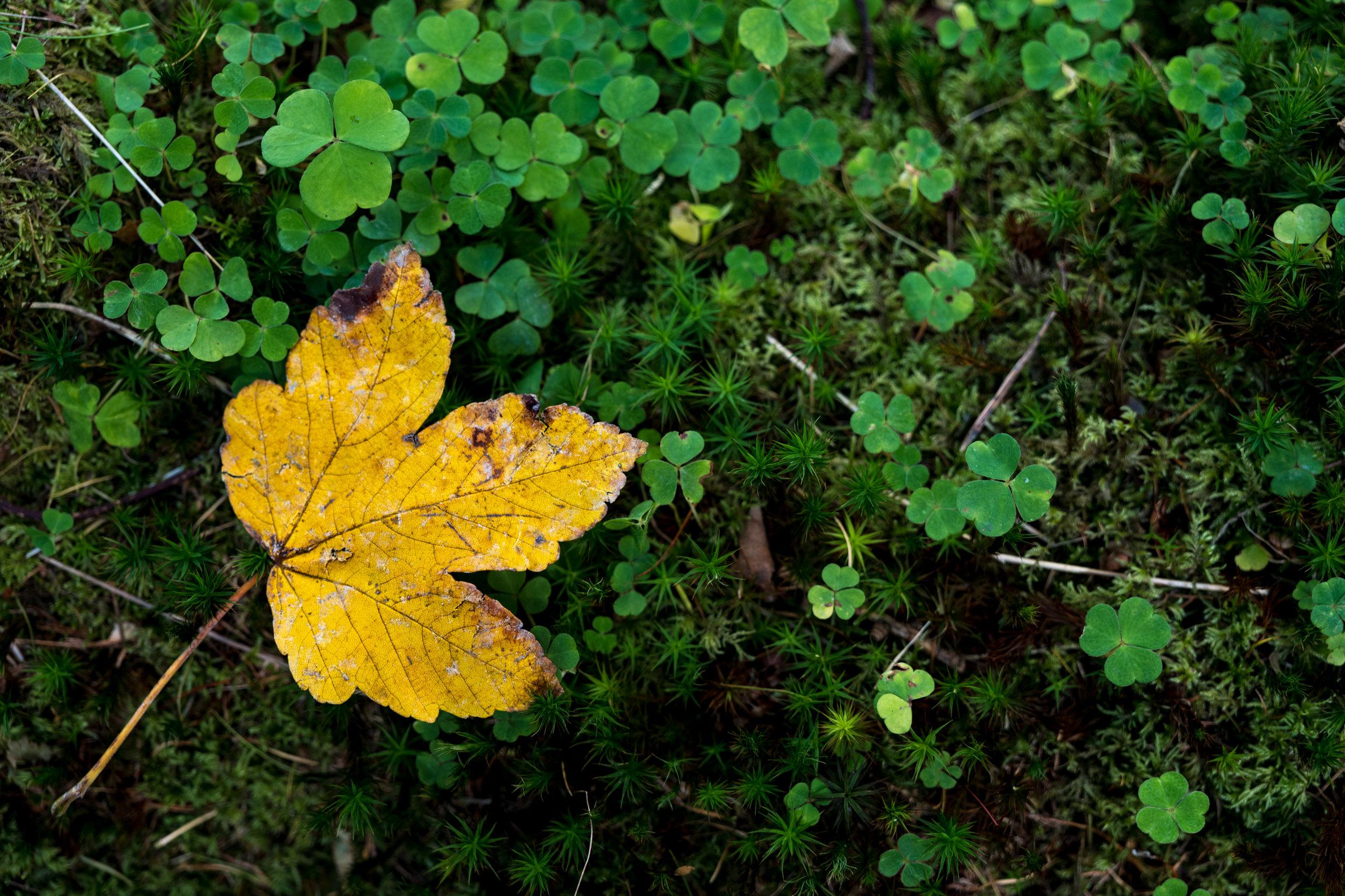 Yellow leaf on a log