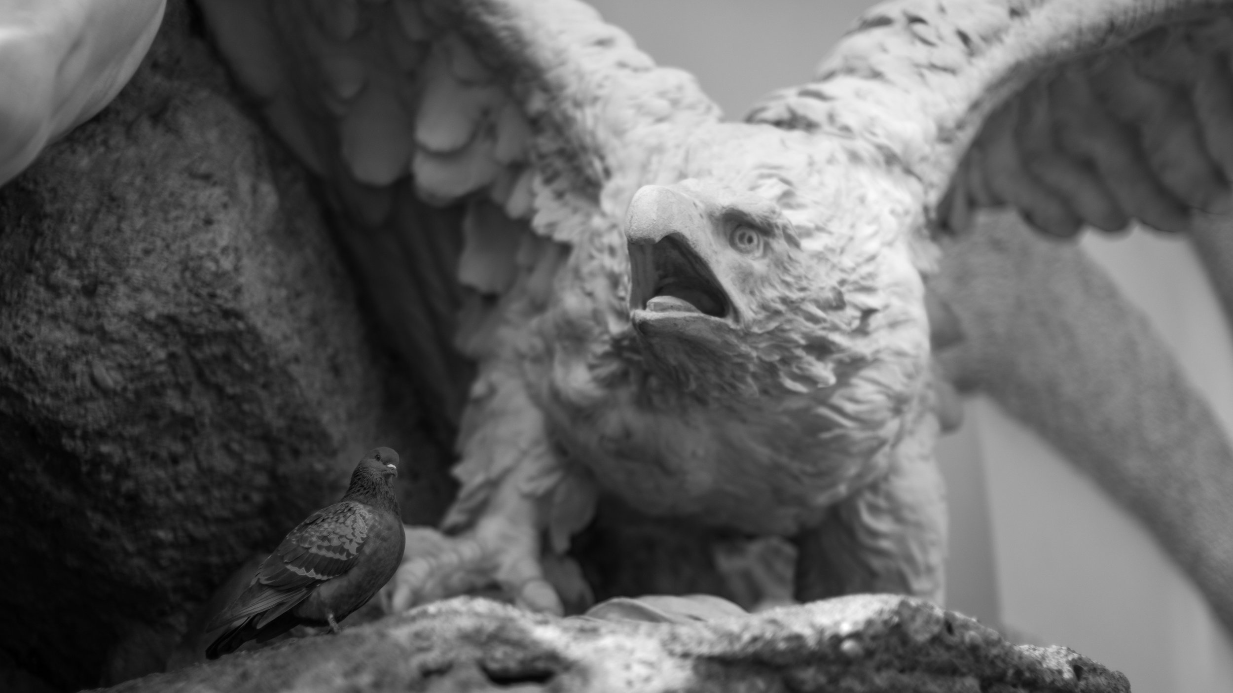 I think this is one of the most ironic images I've ever made. This is some fountain in Austria, and this pigeon was just chilling at the feet of the eagle / hawk thing in the statue. The expressions are priceless.
