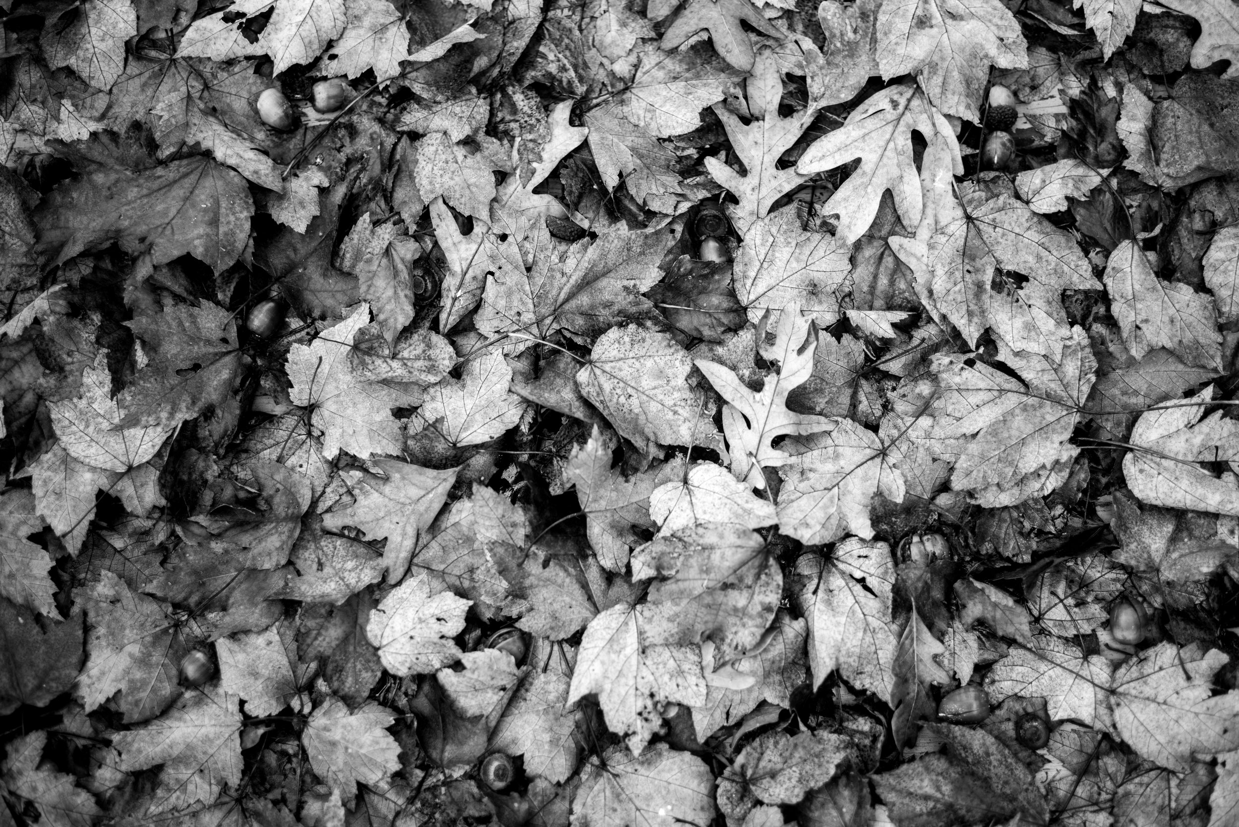 A pile of fresh leaves on the lawn