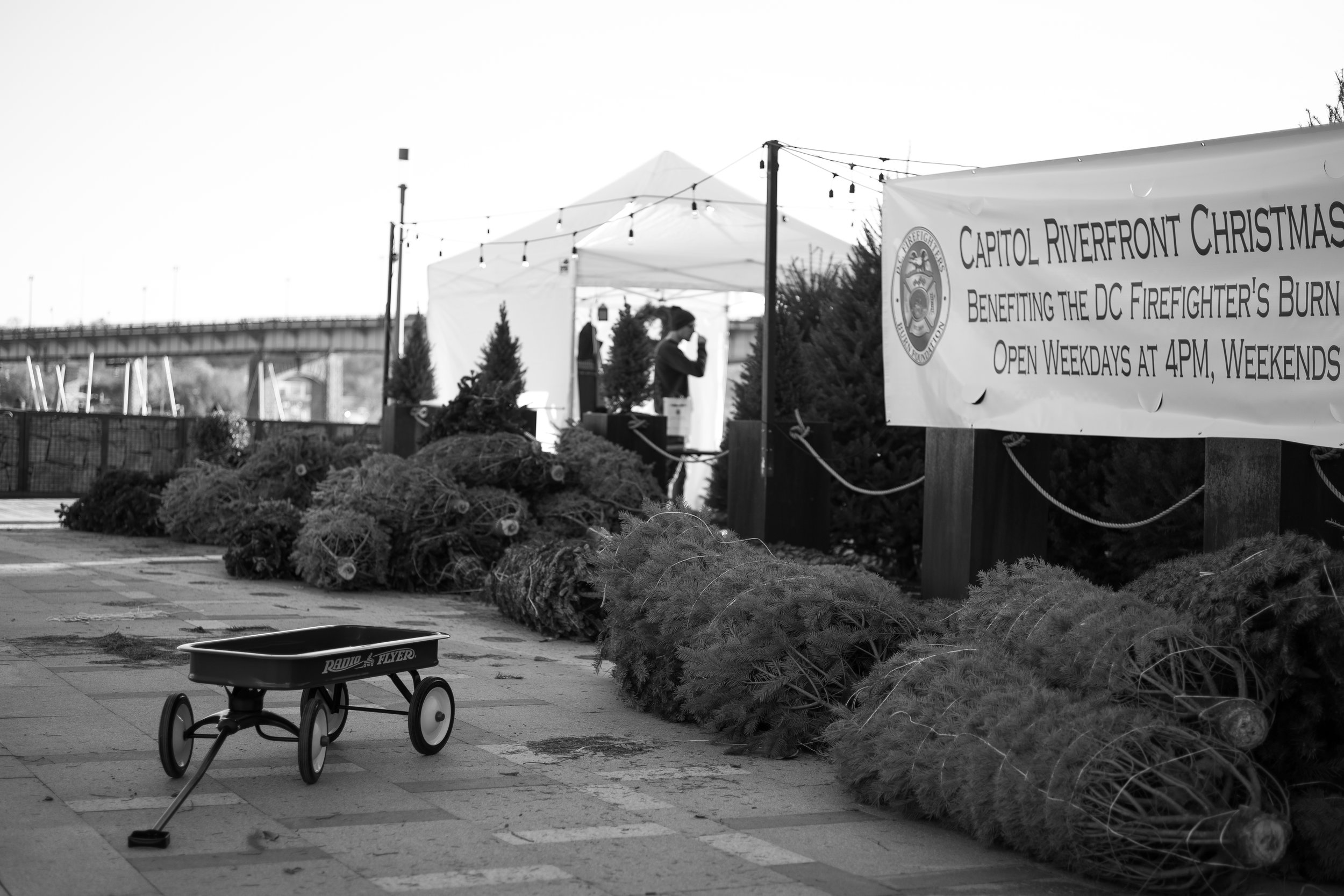 """Christmas Tree Lot - Leica M10 with 50mm Summicron """"Made in Canada"""""""