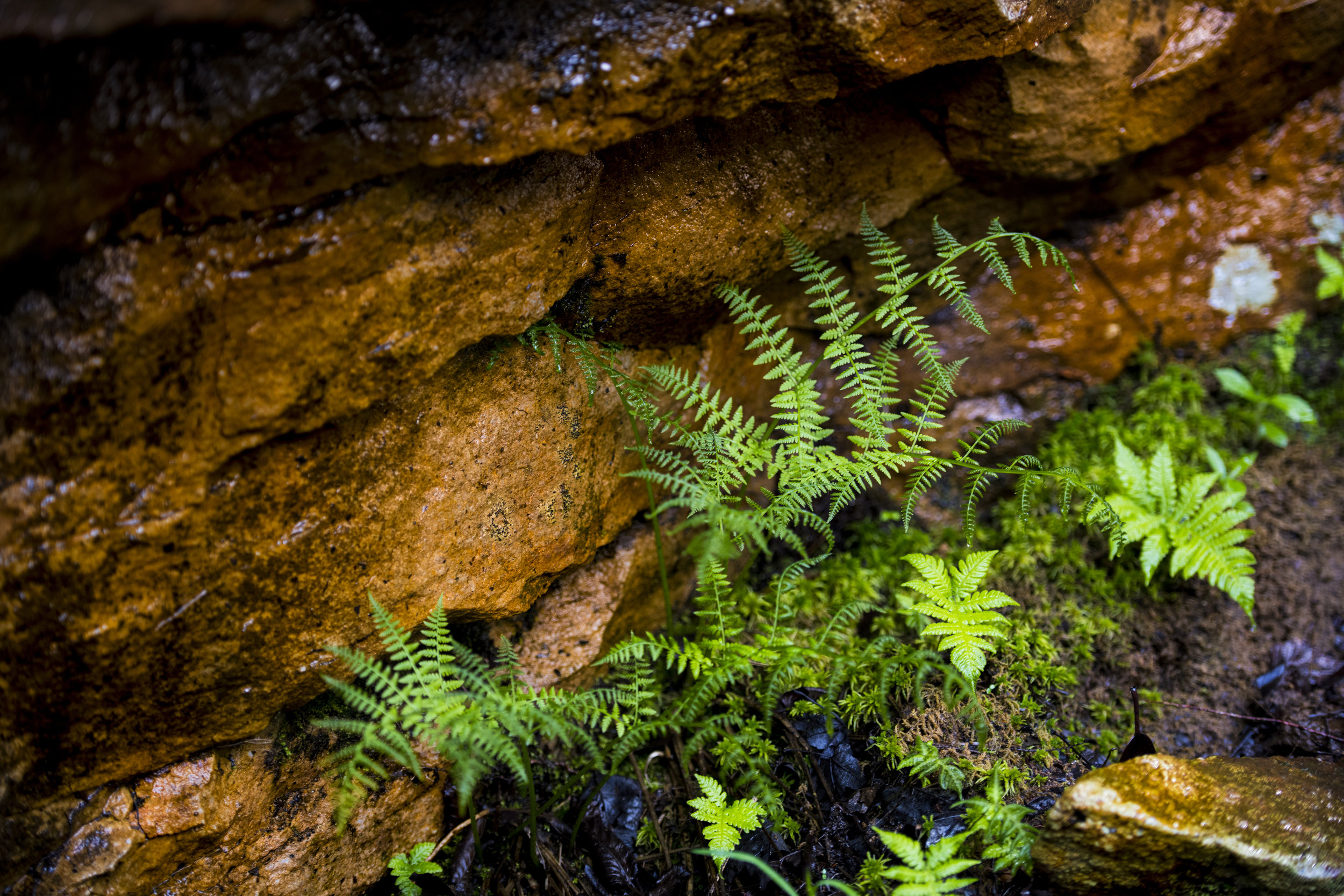 Some ferns grow out of the ground around the falls, where acids from the coal mining that occurred nearly a century ago has stained these rocks. Acids continue to leech into the landscape, despite a cleanup project in the 1990s.
