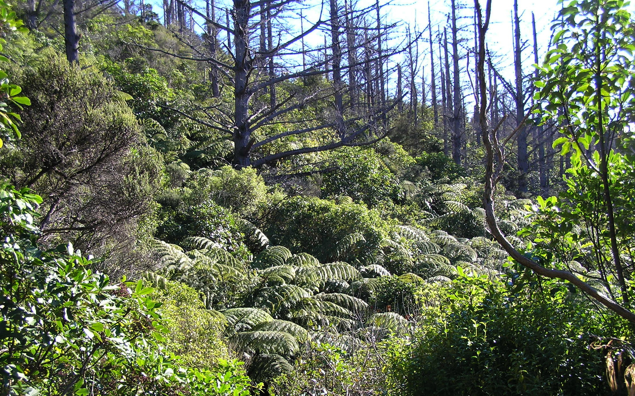 NATIVE REGENERATION - dead standing trees encourages native forest regeneration..