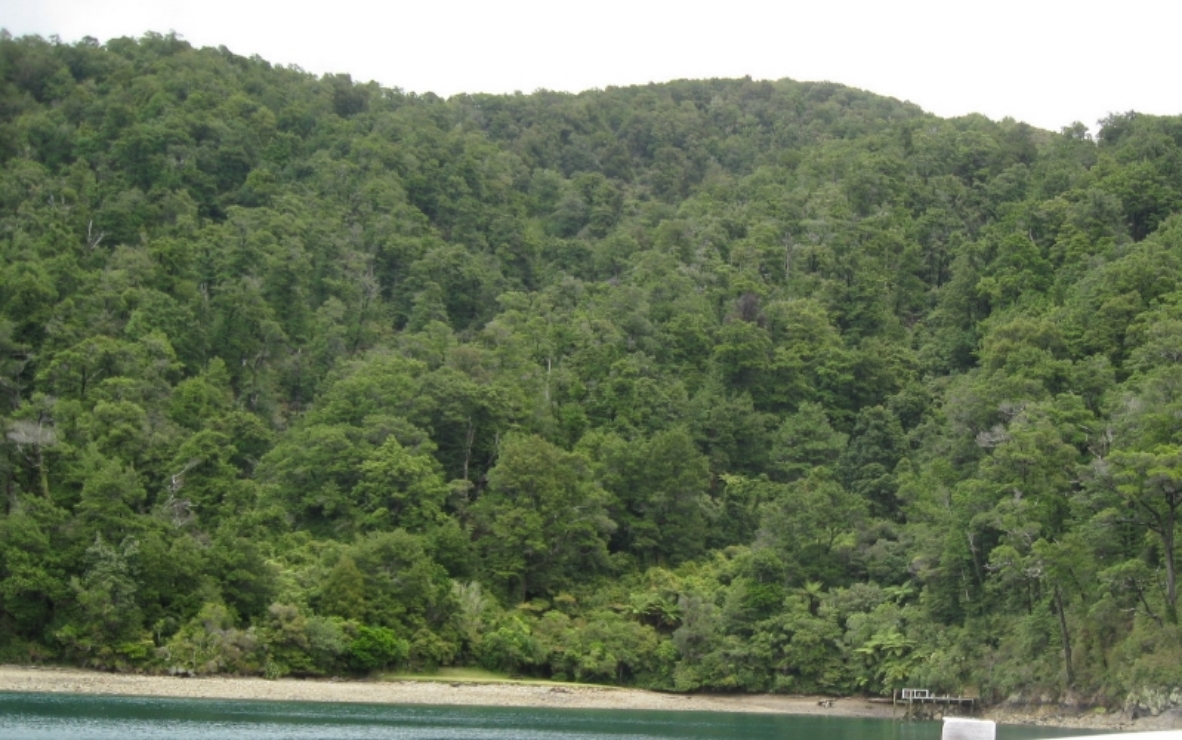 HOW WE'D ALL LIKE THE SOUNDS TO LOOK - native bush down to the shore ..