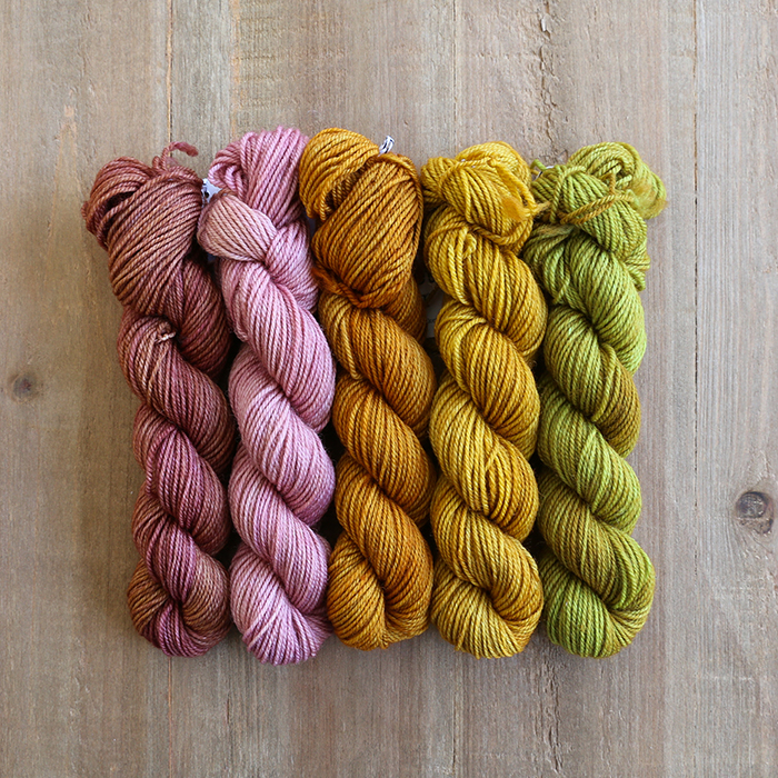 SOFT CITRUS - Rose Gold, Tea Rose, Spiced Pumpkin, Spanish Coin & Moss (set of 5)