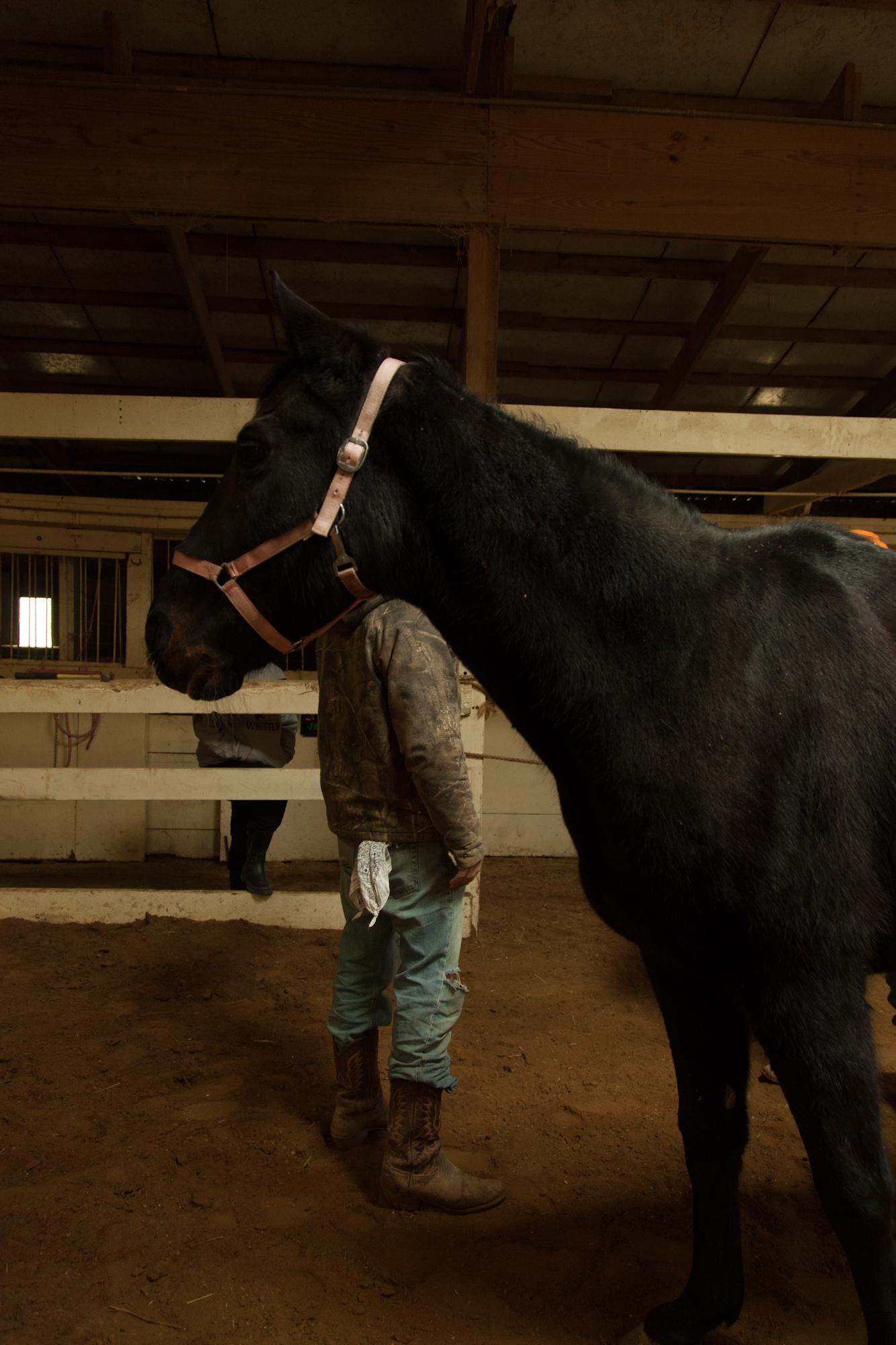 horses chicago