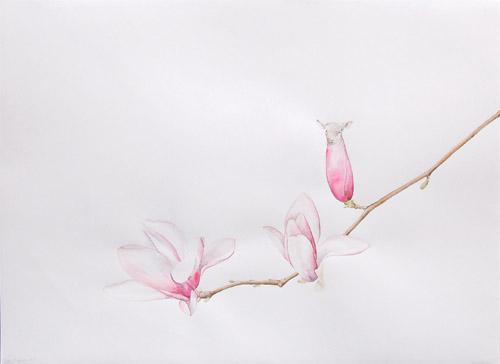 sheep_magnolia_5.jpg