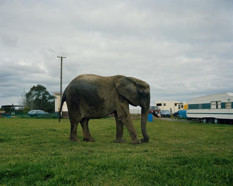 Jumbo, Whirling Brothers Circus, Hamilton, 2008 by Derek Henderson | Digital C-Print