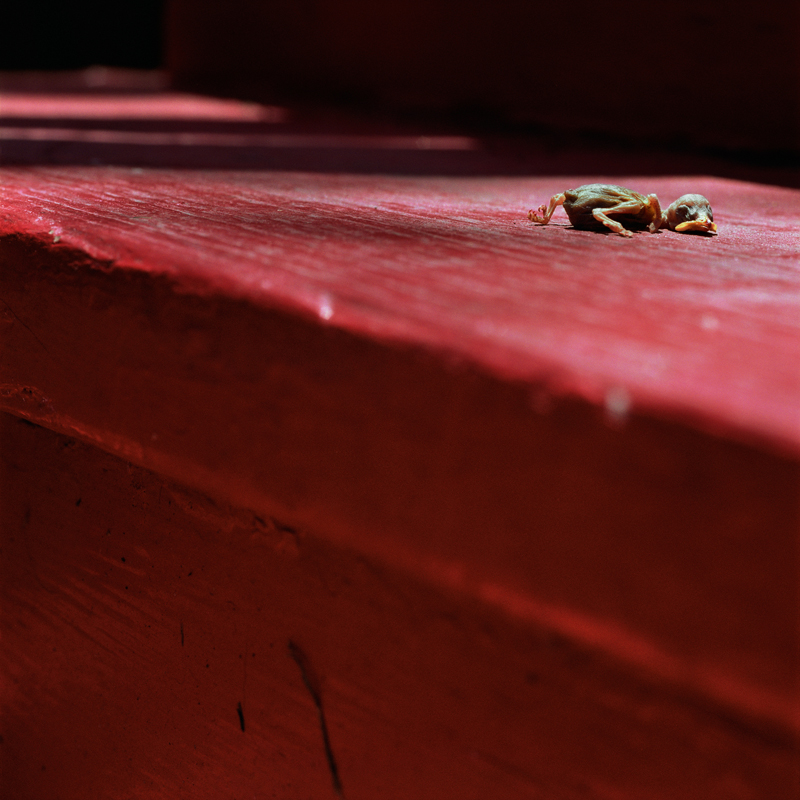 Bird on Stairs by Colleen Plumb | Digital C-Print