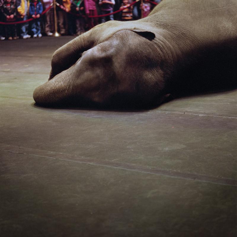 Circus Elephant by Colleen Plumb | Digital C-Print