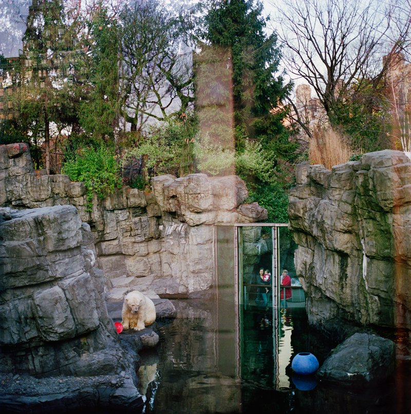 Central Park Zoo by Colleen Plumb | Digital C-Print