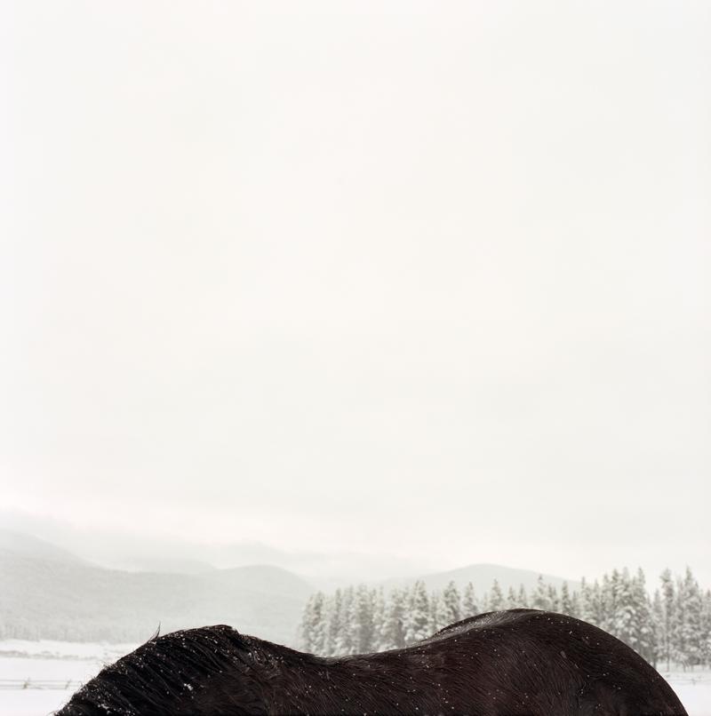 Horseback by Colleen Plumb | Digital C-Print