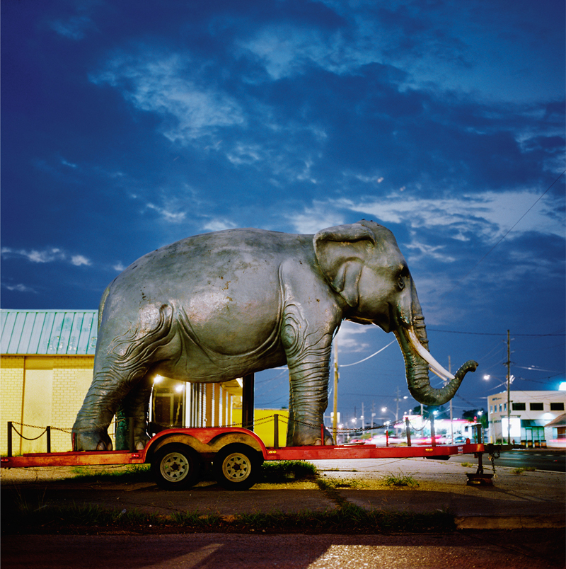 Nungesser Elephant by Colleen Plumb | Digital C-Print